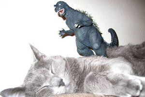 From www.stuffonmycat.com, in 2006. Their best picture ever.